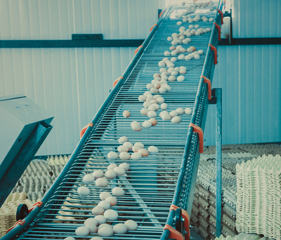 Intelligent Central Egg Collection System